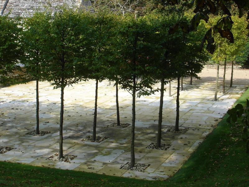Tree block planting