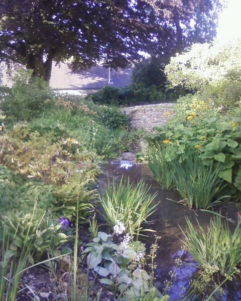 Water features and pond design and build by marshall james for Design of maturation pond
